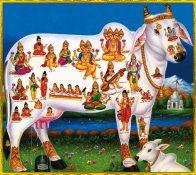kamadhenu-surabhi-hinduism